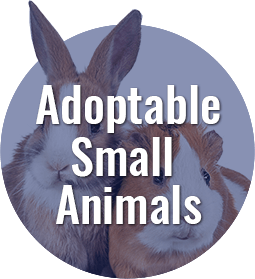 Adoptable Small Animals