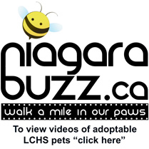 NiagaraBuzz.ca - walk a mile in our paws. To view videos of adoptable LCHS pets click here